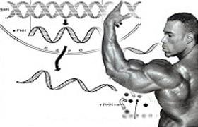 Aminosäuren Potenz