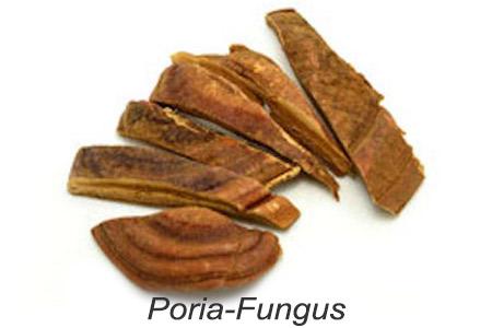 Poria Fungus